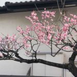 春がやってきました。のサムネイル画像